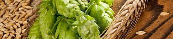 14957202-barley-and-hops