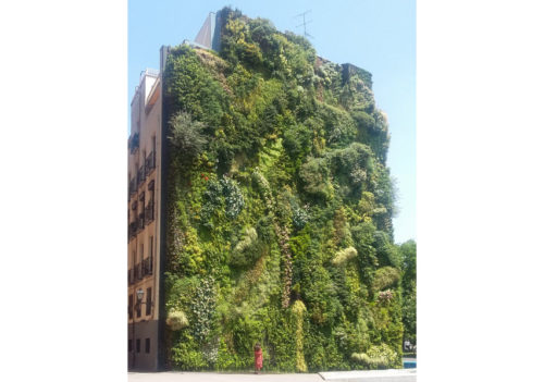 Patrick Blanc's vertical garden at CaixaForum Square, Madrid