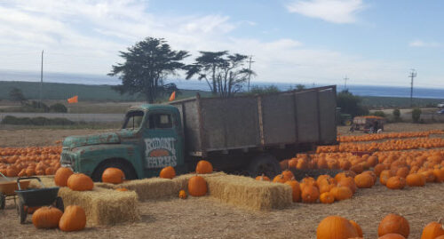 Pumpkin riot, Rodoni Farms
