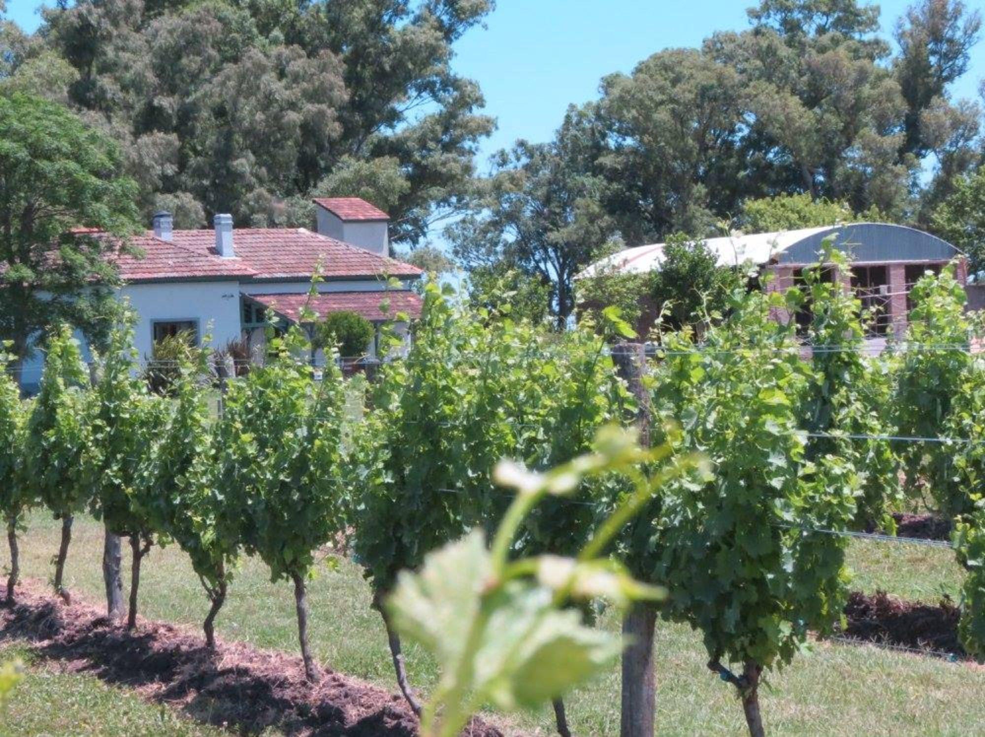 Vinos Uribelarrea