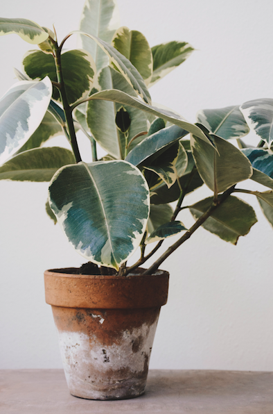 Air-Purifying Plants: 10 Houseplants That Will Purify Your Air