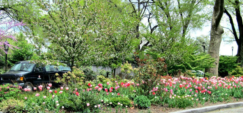 Gracie Mansion Tulip Garden