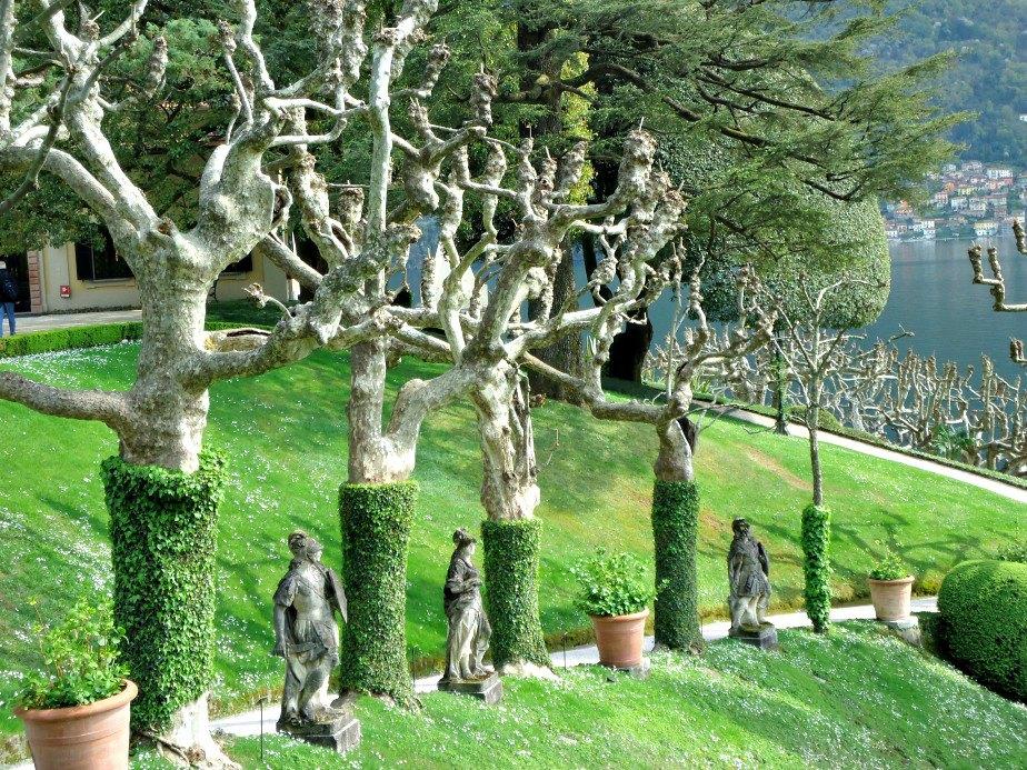 Candelabra Plane Trees at Villa del Balbianello Lake Como Italy