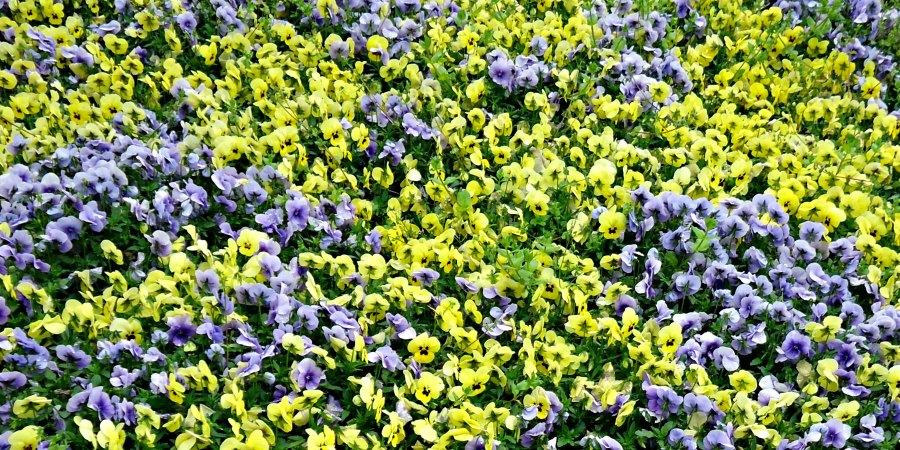 Villa D'Este Flower Bed