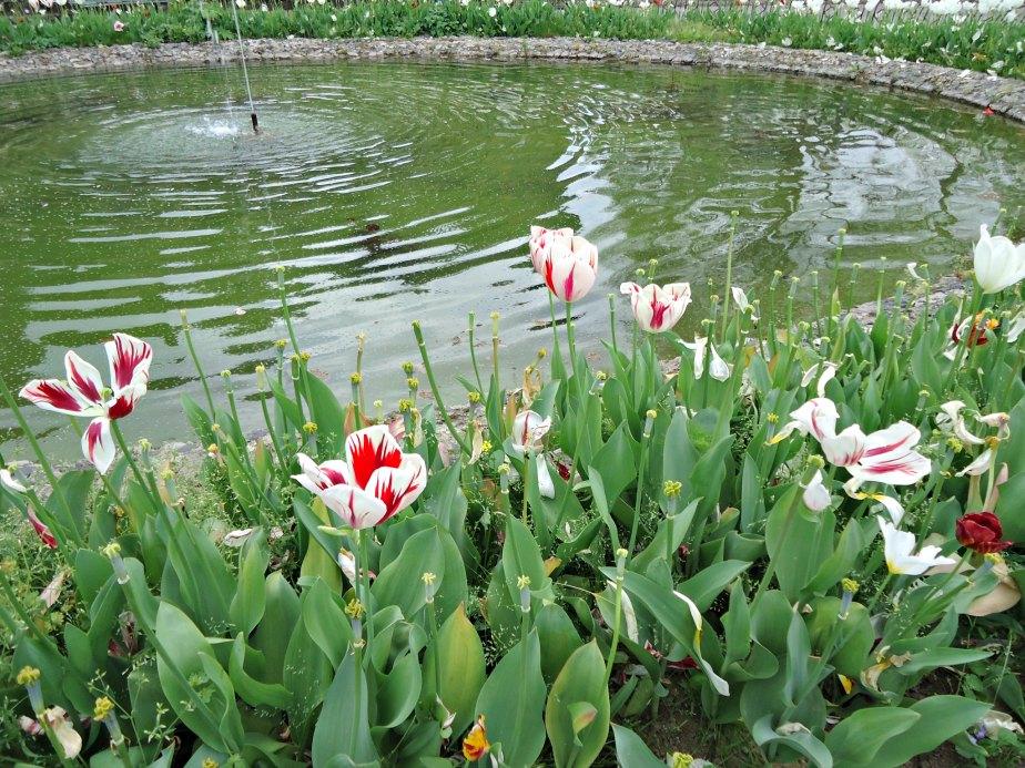 Pond at Piazzale Michelangelo