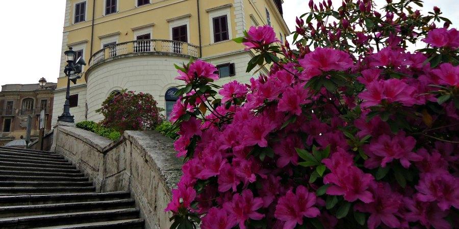 Flowers Spanish Steps