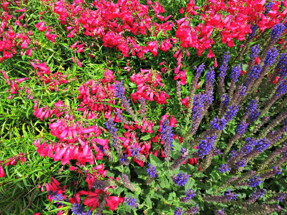 Pink & Purple Flowers, Kew Gardens
