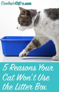 5 reasons your cat won't use the litter box