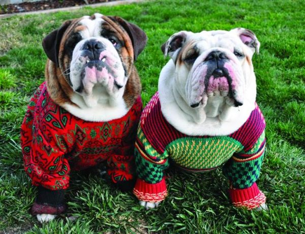 Ugly Xmas Sweater Doggie Party!
