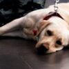 no dogs left behind-spca