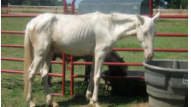 Healing Horses Rescue