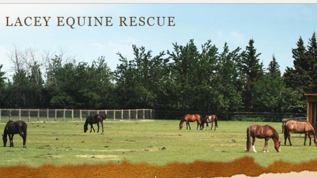 Love of Lacey Equine Rescue