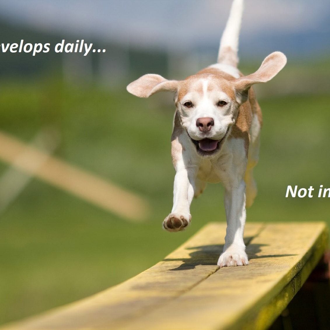 happy-dog1