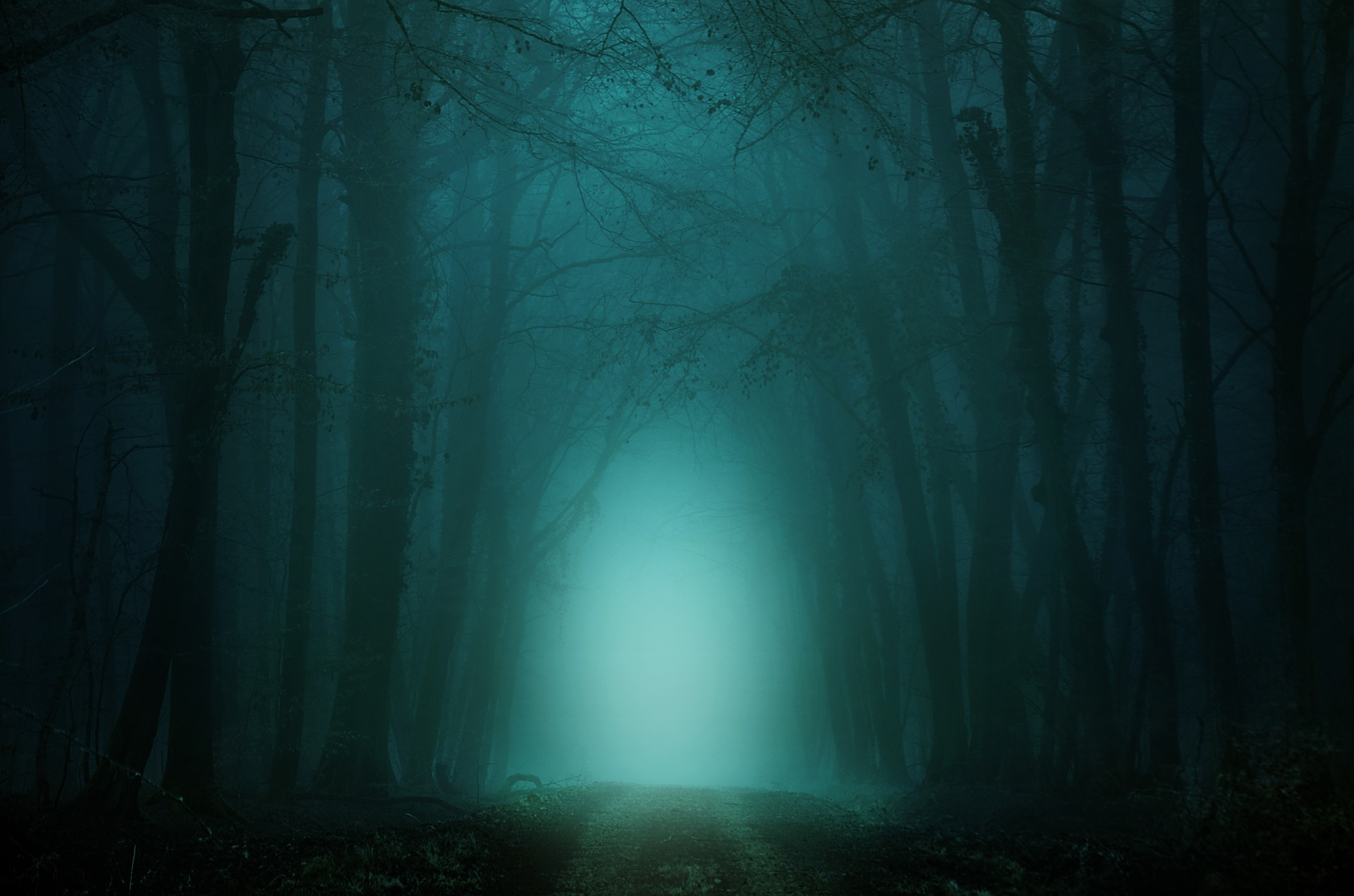 forest-4099730_1920