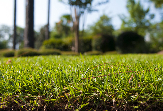 aerate-your-lawn