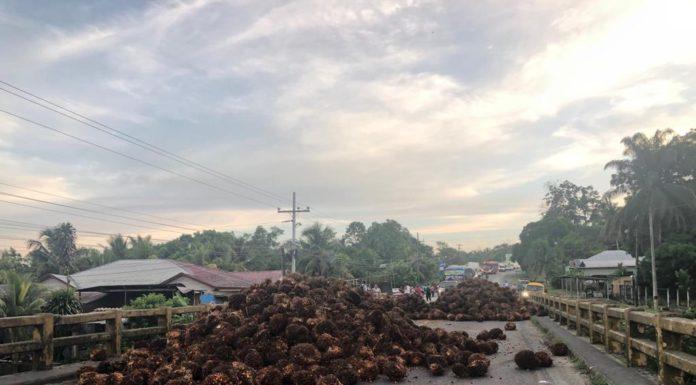 toma productores de palma africana