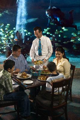 aquarium-waiter