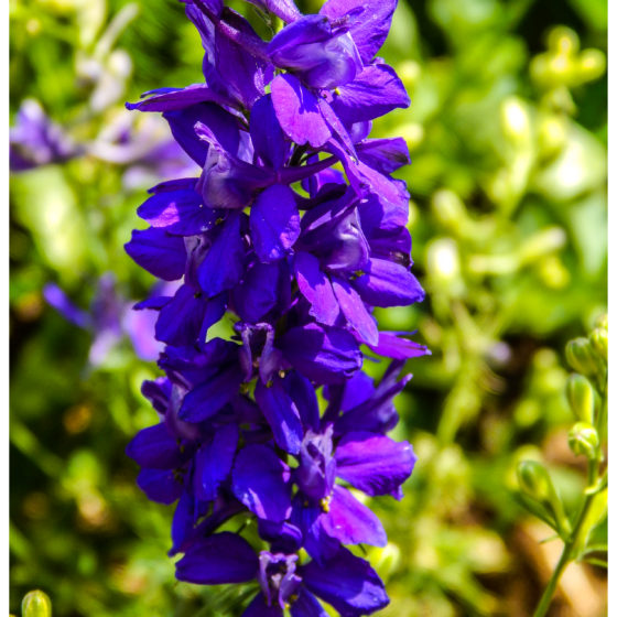 Wildflowers24