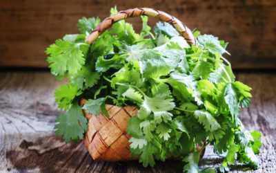 Healthy Ingredient Highlight: Cilantro