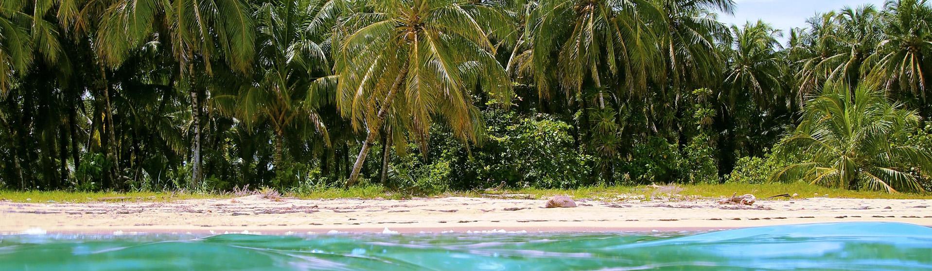 Cahuita Snorkeling & Rainforest Hike