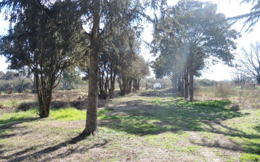 Se vende casa en 4 hectáreas en Elvira- Lobos