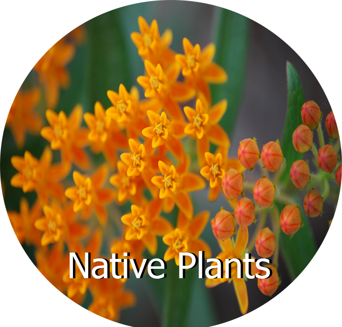 Native Plants2