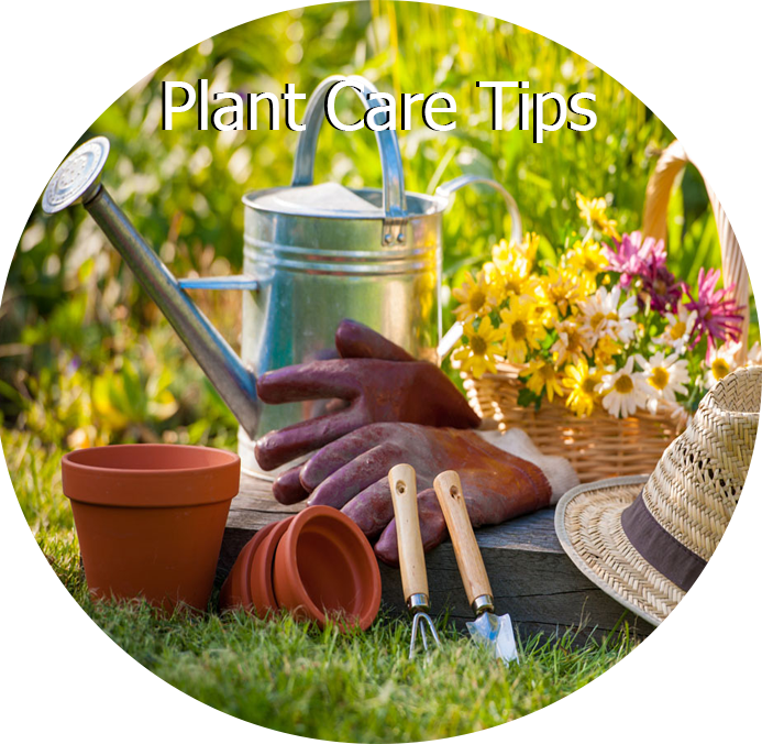 Plant Care Tips