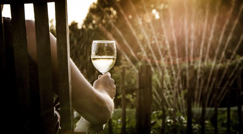 5 vinos frescos