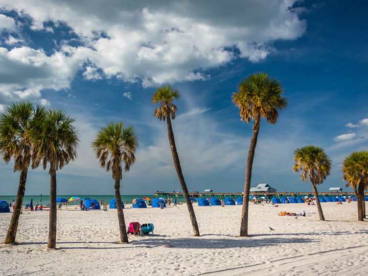Palm trees on the beach in Clearwater Beach, Florida