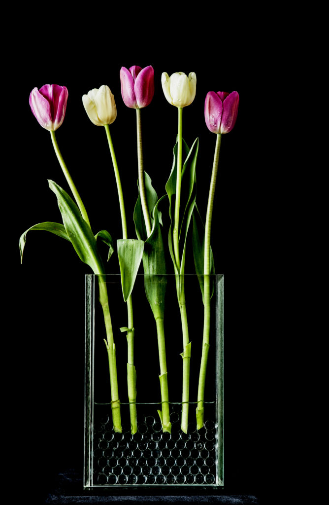 Five Pink and Yellow Tulips