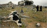 Killing Gaza