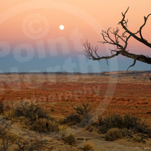 Point North Photography-DESERT TREE WITH MOON AT NIGHT
