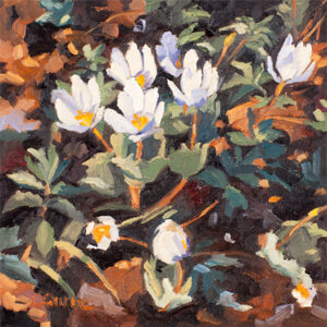 Bloodroot_III_Cropped copy
