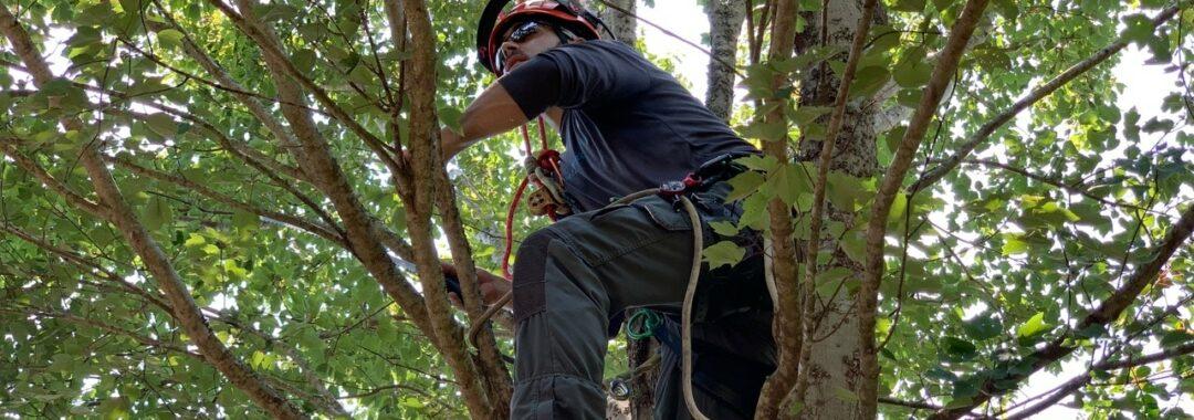 New Leaf Arboriculture - Navarre - 2019 - Tree Services