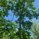 Tree Care Services 01