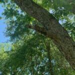 Tree Care Services 04
