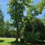 Tree Care Services 05
