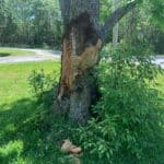 Tree Care Services 09