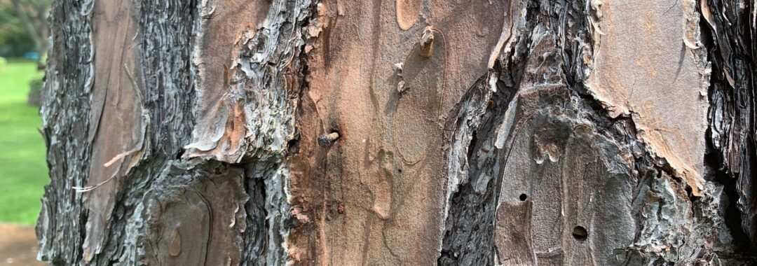 Bark Beetle Treatments For Trees