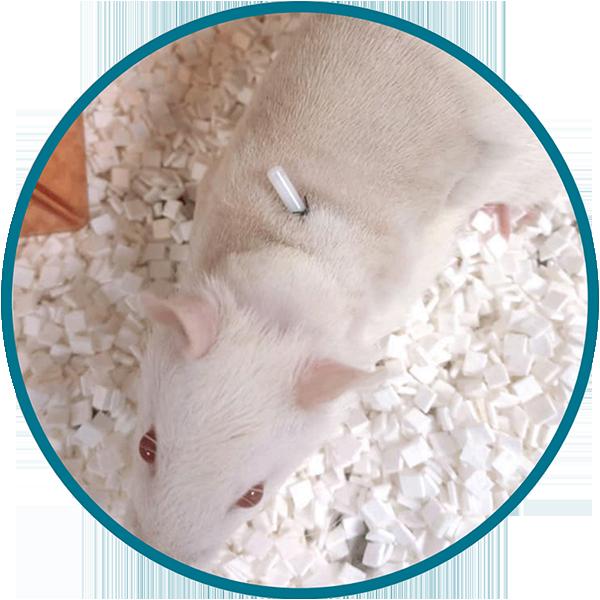 Culex System Catheterized Animals