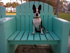 Bogart in a chair 3-24-10