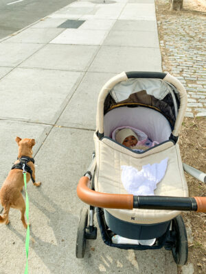 small dog and baby in a stroller on a walk