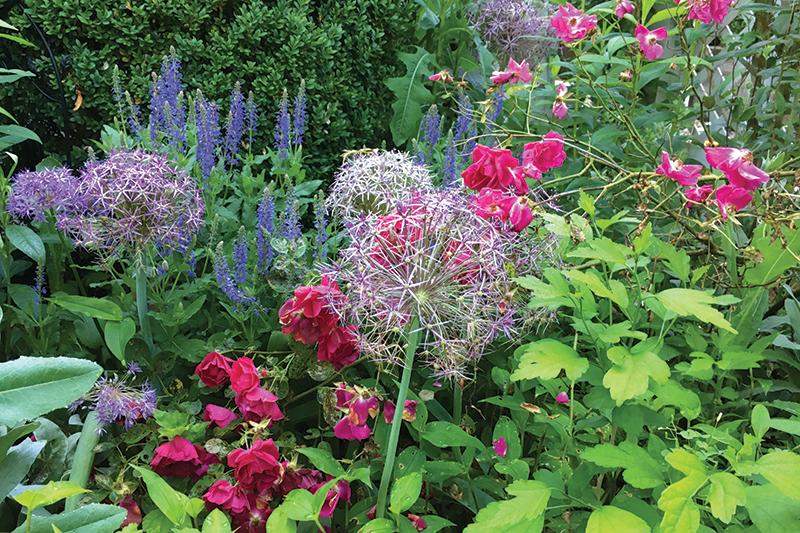 Abbington_Garden