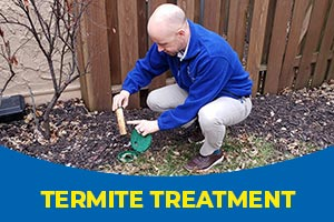 Termite treatment with Blue Beetle Pest Control
