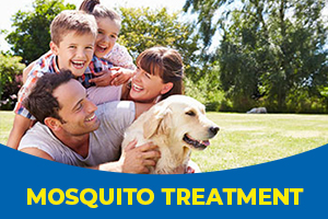 Mosquito treatment as part of Blue Beetle Pest Control services