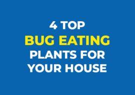 4 top bug eating plants to keep around the house