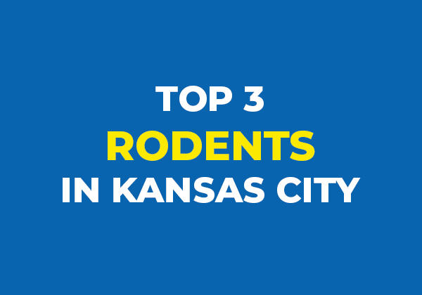 top 3 rodents in Kansas city