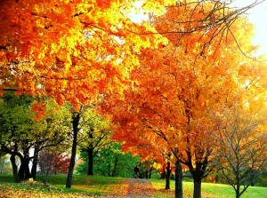 Bright colors of Fall leaves.