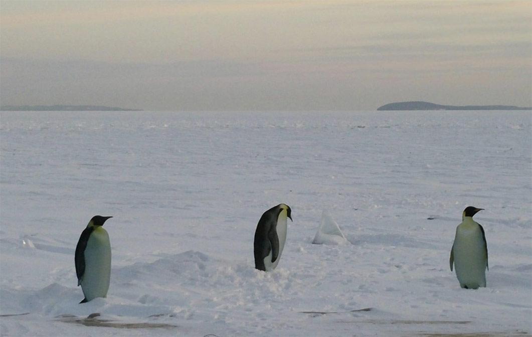 Penguin cut outs on frozen Lake Michigan