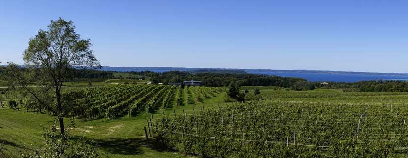 Traverse City Vineyard